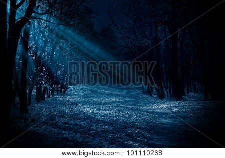 Night forest with moonlight beams