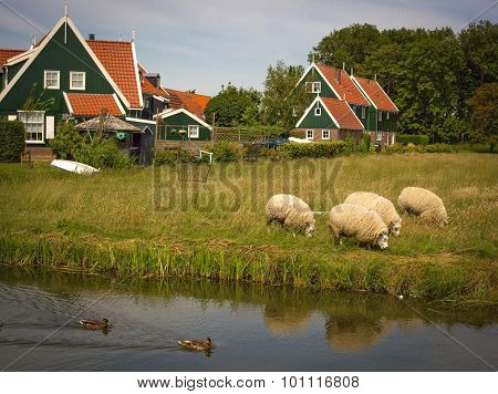 Pastoral farm scene with canal and sheep in Holland