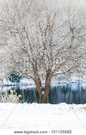 Tree at park covered in snow