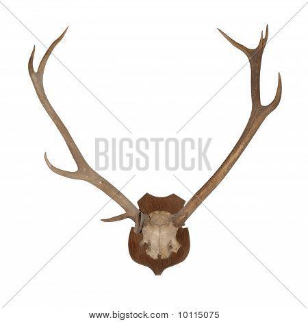 Hörner des Tieres