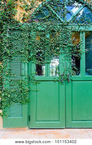 Old Door Locked With Vine Cover The Door