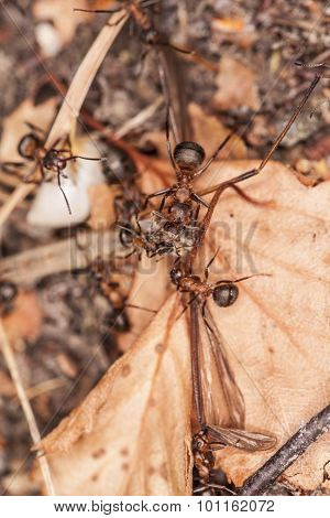 Ants Collect Food