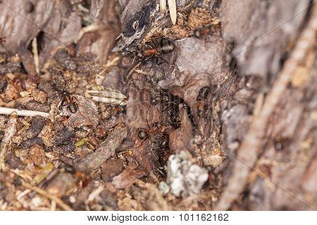 Anthill Full Of Ants