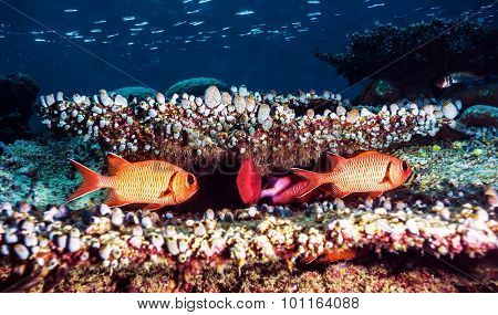 Beautiful underwater background, cute colorful fishes near coral garden, exotic marine life, diving in the Indian ocean, summer tourism concept