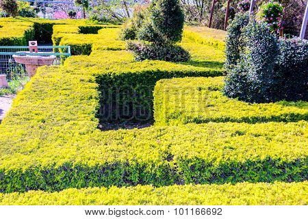 English Green Labyrinth With A Sunny Sky