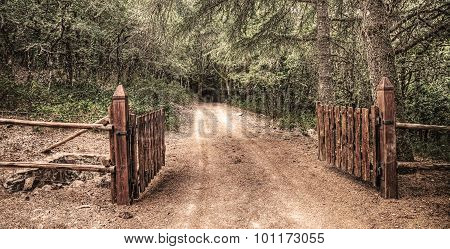 Open Gate In Burgos Forest