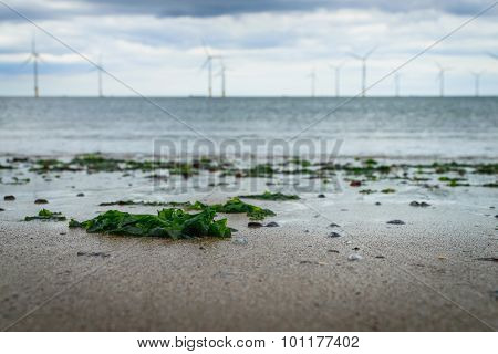 Seaweed Washed Up On The Beach And Blur Wind Turbine Background