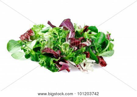 Mixed Salad Leaves  Frisee, Radicchio And Lamb's Lettuce. Isolated On White Background