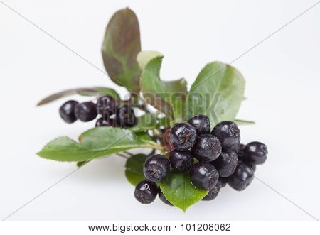 Chokeberry On A White Background.