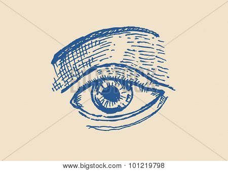 Sketch of An Eye and brows vector and jpg