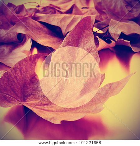 a pile of dried leaves and the text fall in a circle