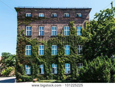 house in grapes at Krakow near Wawel Castle