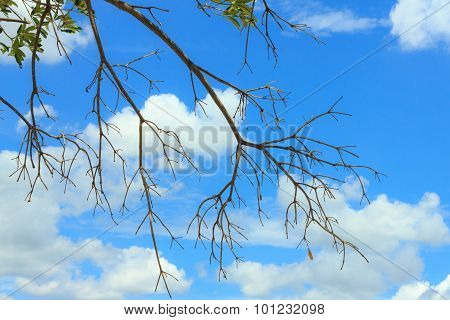 Tree Branches Against Blue Sky Background.