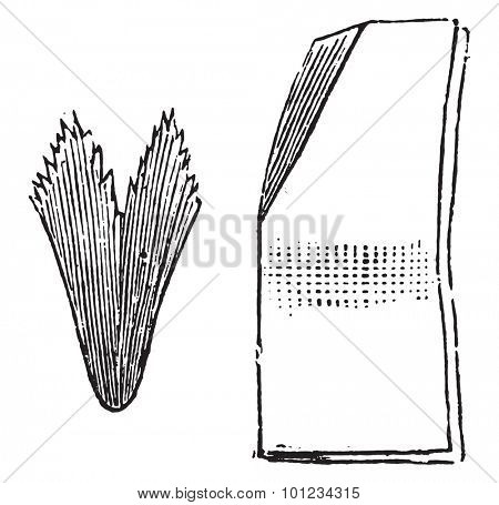 Secondary way to fold the filter paper, vintage engraved illustration.