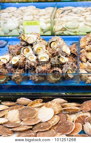 Sea Snails And Scallops At Fish Market