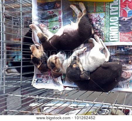 3 puppies sleeping in a small cage