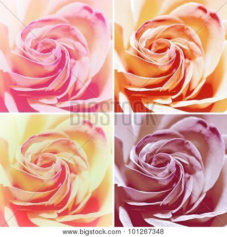 Set Of Macro Shot Of Red Rose Flowers