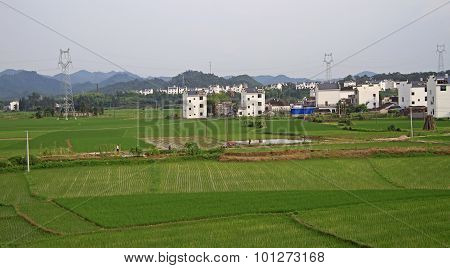 rice field in some chinese settlement