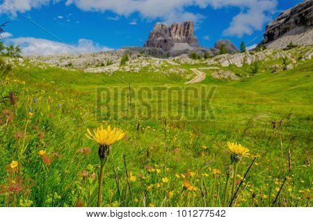 Amazing landscape with mountain flowers, Italy