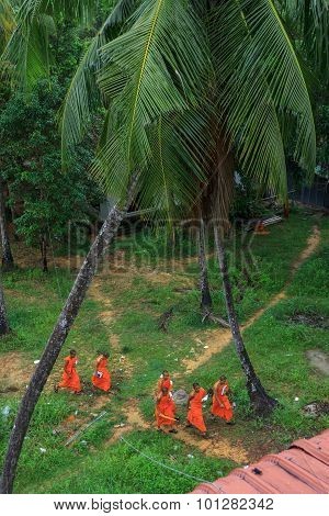 Group Of Young Southeast Asian Buddhist Monks Walk In Temple Park
