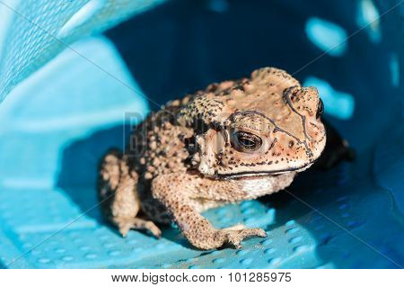 Small Toad Hide In The Shoe