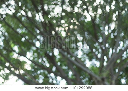 Natural Bokeh From Leaf Tree