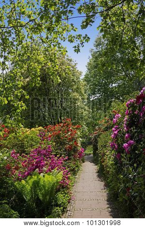 Beautiful Park With Rhododendrons And Fern
