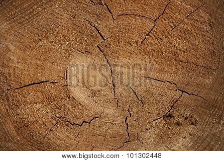 Stump background in nature