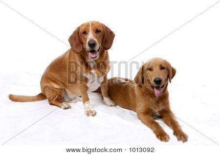 Side By Side Dogs