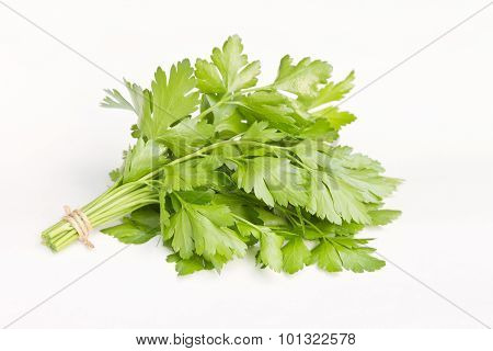 Bunch of fresh parsley isolated