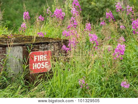 Fire weed surrounding the fire hose box