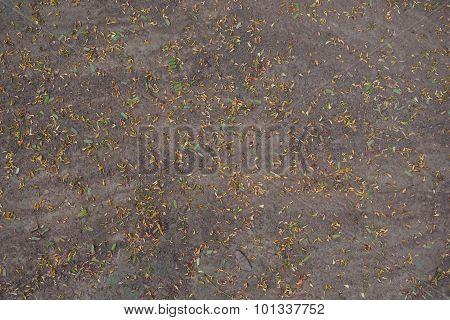 Abstract Of Tamarind Flowers On Floor