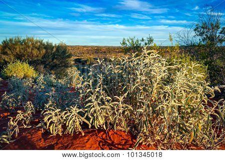 Australian Desert (outback) In Northern Territory