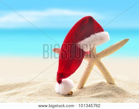 Sea-star in santa hat walking at sea sandy beach.