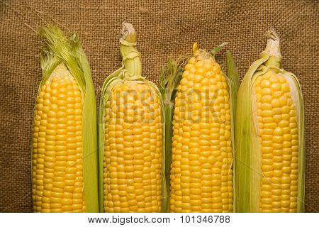 Ripe Fruit Of Corn On Old Cloth