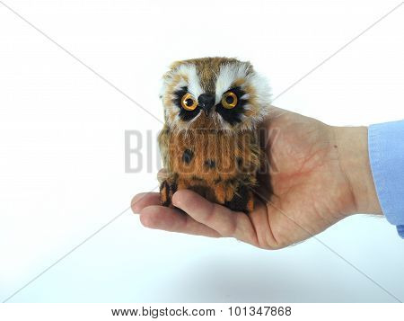 Knowledge Transfer Symbolized By Handing Over An Owl