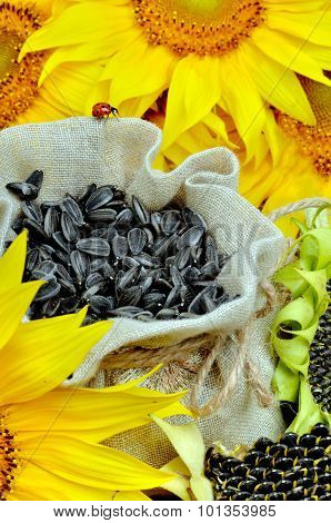 Sunflowers And Sunflower Seeds In Bag