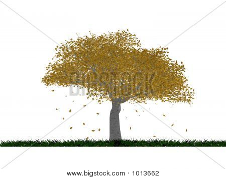 Tree Autumn