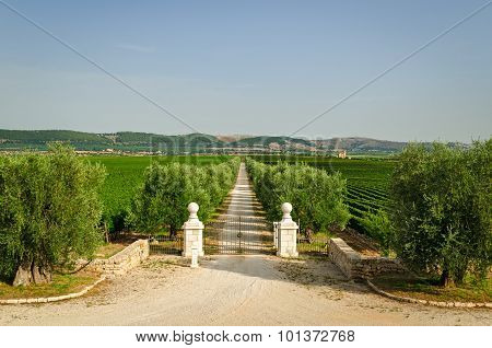 Italy, Villa Entrance Gate And Estate (puglia)