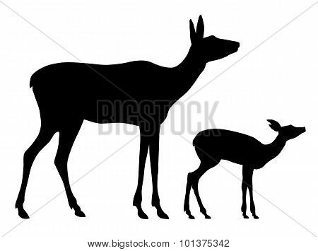Doe And Her Baby
