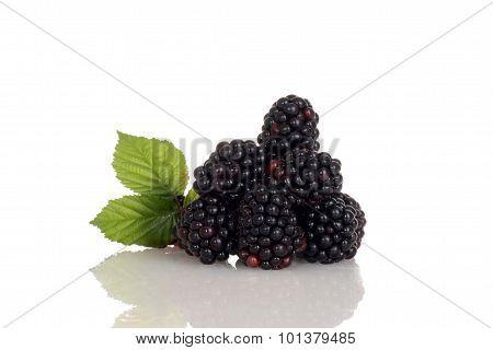 pile of blackberries with leaves