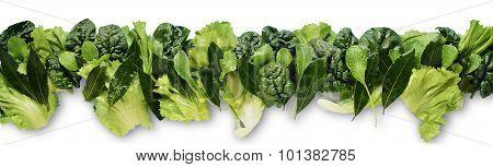 Frieze Of Green Salad