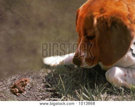 Beagle Meets Toad