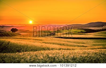 Golden Tuscan Sunset