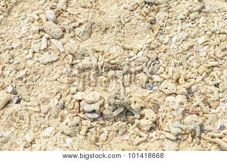 Corals, Stones, Shells, Sticks And Sand On The Beach