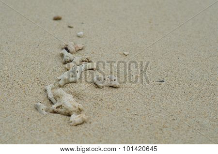 Coral Carcass On The Beach