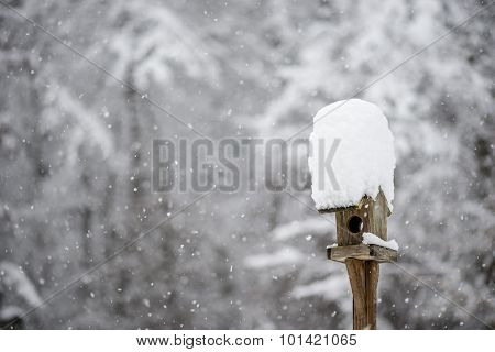 Bird Feeder With A Hat Of Winter Snow