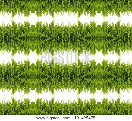 Tuber Sword Fern Seamless Pattern Background