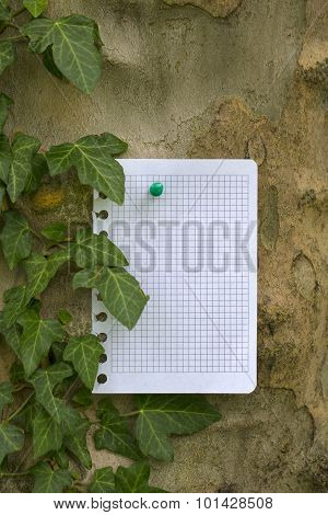 Sheet Of Paper Pinned To Tree