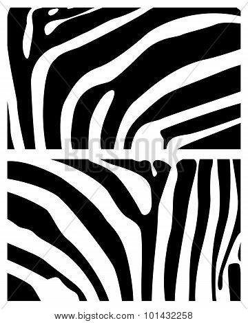 Background Zebra